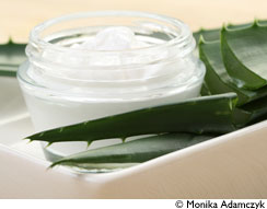 aloe vera une plante aux multiples bienfaits le blog aromatic provence. Black Bedroom Furniture Sets. Home Design Ideas