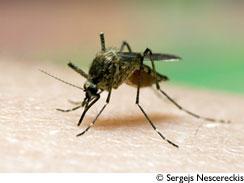 Piq res d 39 insectes comment les viter et les apaiser le blog aromatic provence - Piqure aoutat et huile essentielle ...