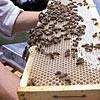 Cosmétique bio Produits de la ruche